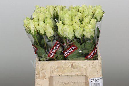 коробки для цветов оптом москва 51 роза дешево