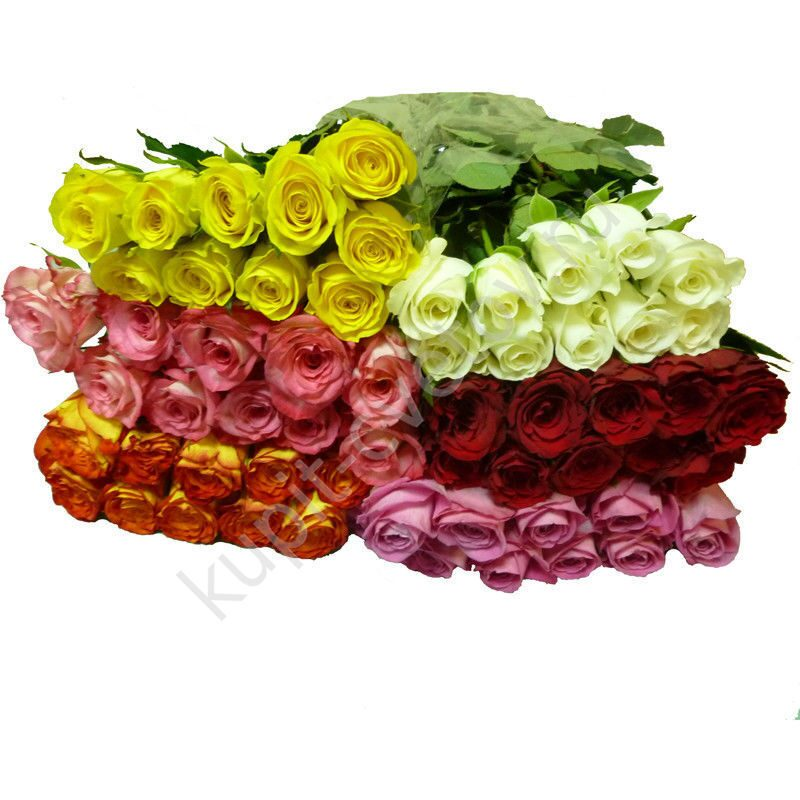 кения роза 40 см фото