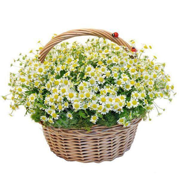 Брянск доставка цветов флоренция